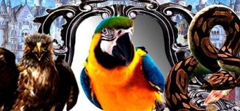 Королевство волшебных зеркал