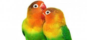"""Виставка птахів і терраріумних тварин """"TropicPets"""""""