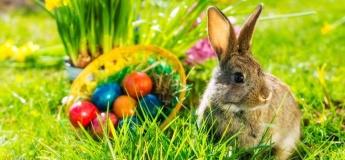 Вечеринка Egg Hunt
