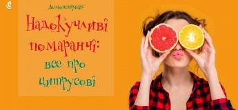 Надоедливые апельсины: все о цитрусовых