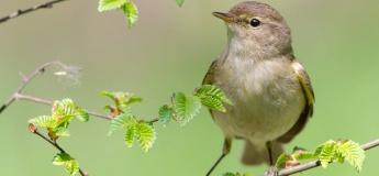 Birdwatching в ботаническом саду