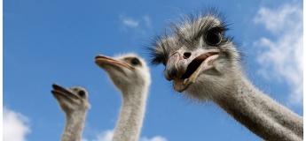 Екскурсія на страусину ферму + дегустація сиру