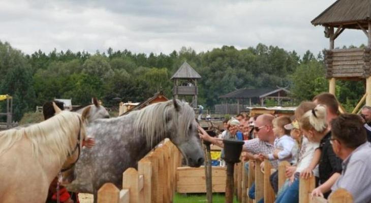 """Шоу-виставка """"Світ коней"""""""