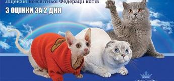 """Международная выставка """"Бал котов"""""""