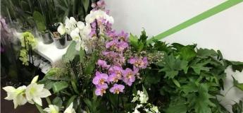 Цветочная барахолка Райский Сад