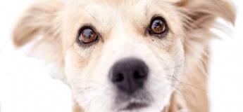 Виставка фотопортретів собак