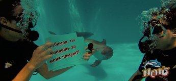 """Пропозиція руки і серця в дельфінарії """"Немо"""""""