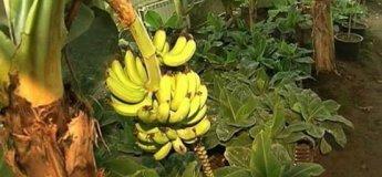 Семейная экскурсия на Банановую ферму